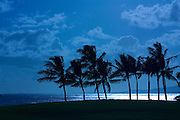 Palm trees silhouetted against the ocean and sky