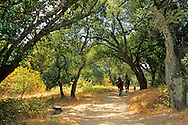 Horse riding on trail through oak trees at Garland Ranch Regional Park, Carmel Valley,Monterey Co., California