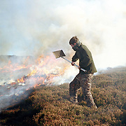 A gamekeeper on the Bransdale estate uses a beater to put out the fire after heather burning on the North York Moors, Bransdale, North Yorkshire, UK. Heather is burnt to regenerate it, the more patches there are on the moor the better it is, producing more habitat for the grouse, and that has a knock on effect for the wader population as well.
