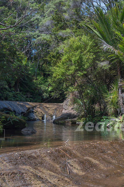 """A lagoon in mid bush along the Goldie Bush Walk in the Waitakere ranges, west of Auckland, New Zealand. The walk is one of the """"wildest"""" and most beautiful track through native New Zealand coastal forrest at the west cost of Auckland."""