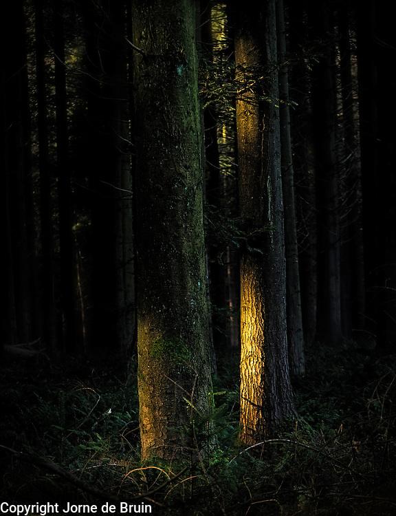 Sunlight hitting tree trunks in the dark of the forest.