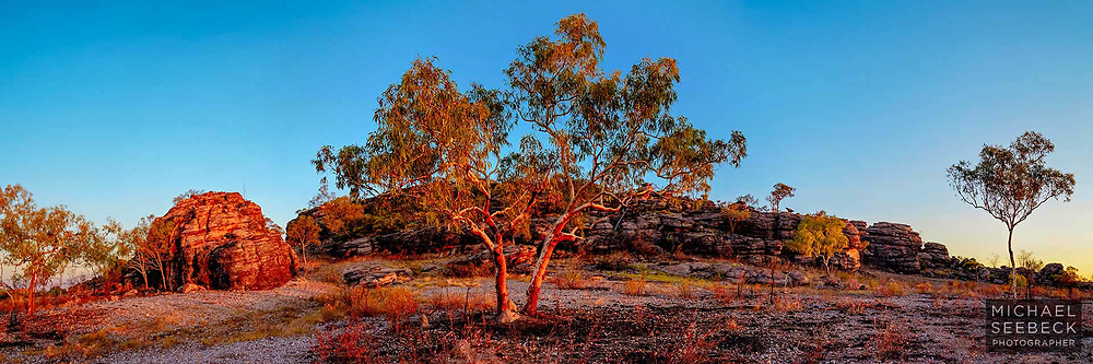 A pair of bloodwood eucalyptus trees at Hell's Gate, at the edge of the Barkly Tableland, in western Queensland near the Northern Territory border, captured at the last sunlight of sunset.
