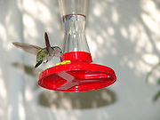 humming bird with feeder