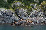 A sea lion rookery in the Inian Islands, Alaska's Inside Passage, USA