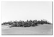 Colony of Chinstrap Penguins at Hydrurga Rocks, Antarctica. Nikon D850, 70-200mm @ 170mm, f5.6, EV+1.33, 1/2000sec, ISO640, Aperture priority