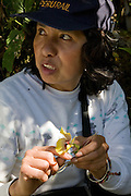 Norma Salinas identifies an orchid in the cloud mountain forest next to the Interoceanic Highway