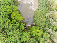 Aerial view of dead tree laying in lake.