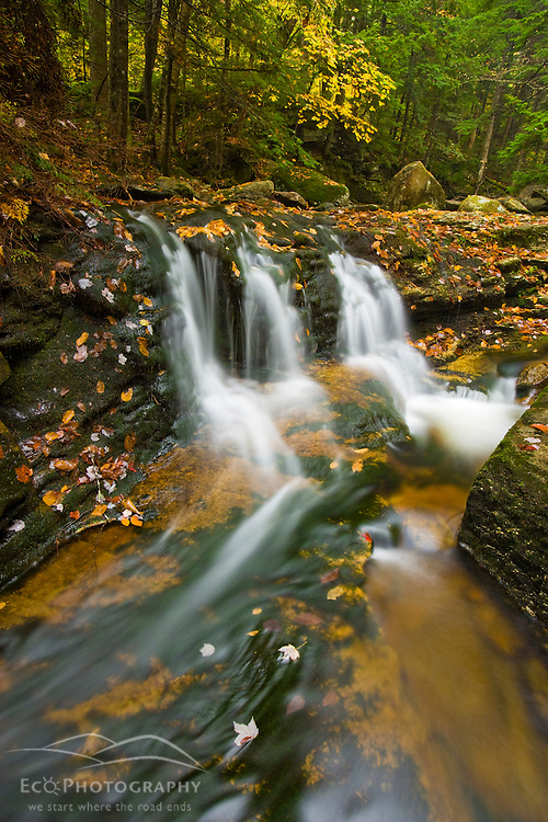 A tributary of the Baker River cascades through a hemlock forest in Groton, New Hampshire. Groton Hollow.  Fall.