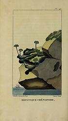 Flore pittoresque et médicale des Antilles, ou, Histoire naturelle des plantes usuelles des colonies françaises, anglaises, espagnoles, et portugaises /<br /> Paris :Ches l'Editeur,1833.<br /> https://biodiversitylibrary.org/page/53287856