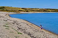 France, Manche (50), Cotentin, Omonville-la-Rogue, le Sentier Littoral ou GR223, plage de galet // France, Normandy, Manche department, Cotentin, Omonville-la-Rogue, coastal path, pebble beach