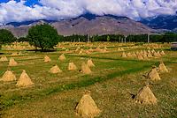Barley fields at the foot of Kambala Pass, Tibet (Xizang, China).