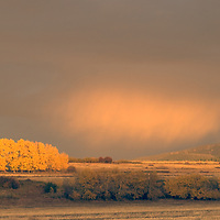 Fall-colored cottonwoods & aspens surrounded by storm squalls in southern Gallatin Valley, near Bozeman Montana. Gallatin Range bkg.