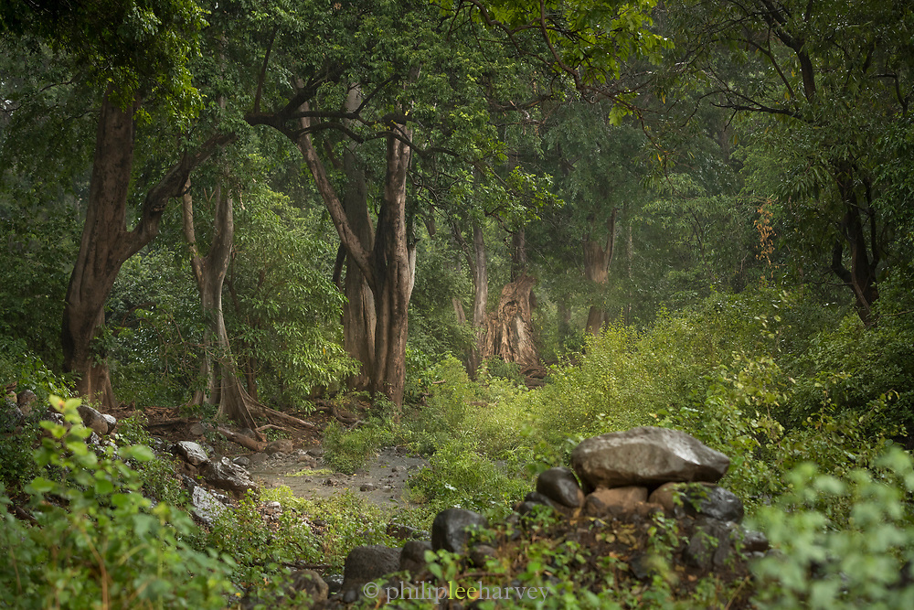 Landscape with view of a green forest during a rain, Lake Manyara National Park, Tanzania