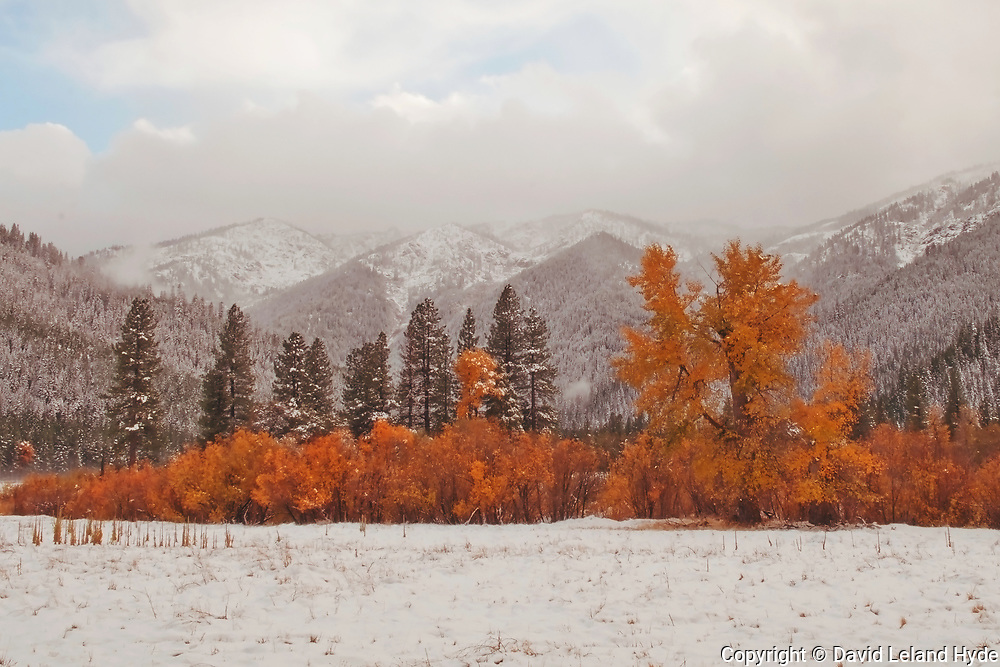 Fresh Snow, Fall Leaves, Genesee Valley, Sierra Nevada Mountains, Orange Leaves on Black Oaks, Willows, Cottonwoods, Milkweed, Fir and Ponderosa Forest, Grizzly Ridge, Mostly Cloudy Skies