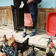 A peasant farmer feeds chickens outside her summer home in the Carpathian Mountains, Romania
