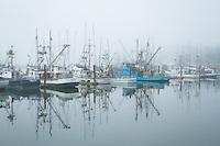 Albacore tuna. Yaquina Bay Harbor. Newport, OR.