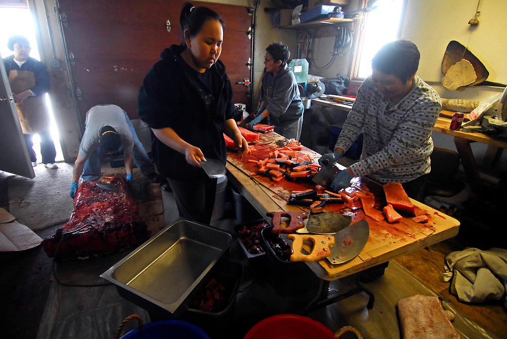 """Barrow, Alaska. After David Leavitt's Crew got a 34ft7"""" whale, the women of his crew cut up the whale meat to cook and serve on the feast at the captain's house. This whale was the fourth landed whale of this Spring season. May 2nd 2007."""