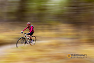 Mountain biking the singletrack at the Pig Farm Trails near Whitefish, Montana, USA MR