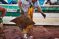 Mexican fishermen sort and butcher catch of Bat Rays (Myliobatis Californica) from Sea of Cortez, San Felipe, Baja California, Mexico