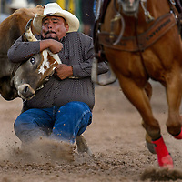 Steer wrestler Ethan Randall digs in his heels to bring down his steer during the first round of the Fourth of July PRCA rodeo Saturday in Window Rock.