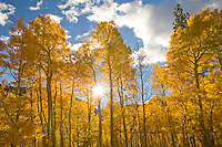 Shades of yellow, green and orange announce the comming of fall.