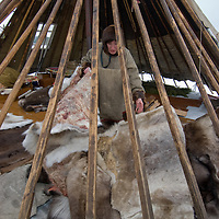 North of the Arctic Circle in Russia, Katerina Vaucheskaya, a member of the last nomadic Komi reindeer herding clan, arranges reindeer skins in the family's  their chum (tepee). Note the glass window in the background, a rare modern concession.