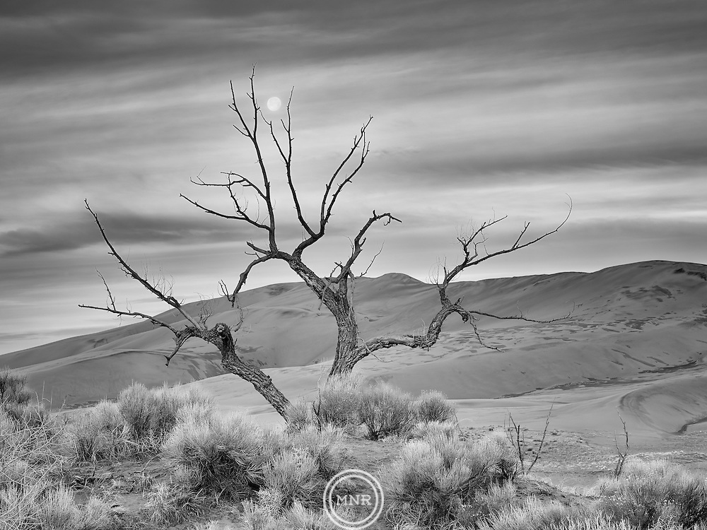The Moon sets behind a single tree in Great Sand Dunes National Park and Preserve, Colorado.