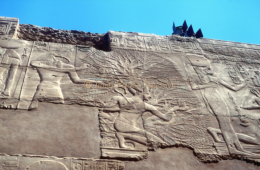 Rameses II (1304-1237 BC) third king of 19th dynasty, and the Tree of Life Karnak: Behind him stands the ibis-headed god Anubis whose role was to take souls of dead before his father Osiris, judge of the underworld.