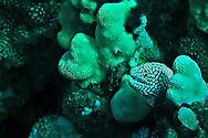 Moray Eel, Maui Hawaii