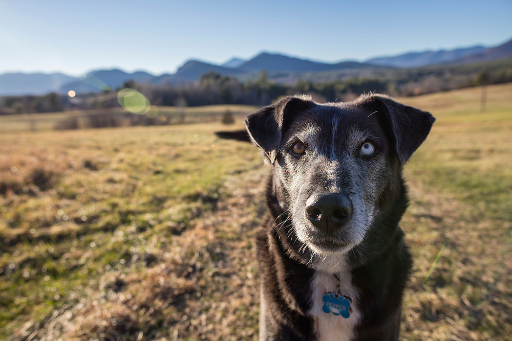 Husky mixed breed dog smiling at the camera
