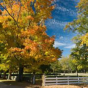 Fall colors atAppleton Farms & Grass Rides, Hamilton, Massachusetts