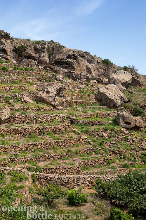 The terraced vineyards of Pantelleria are remarkably rugged and dry.