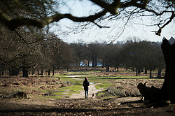 © London News Pictures. 22/02/2014. London, UK.  A Dog walker early morning Richmond Park in West London. The south of England is experiencing warm weather for the time of year and sunshine following weeks of rain and flooding.  Photo credit: Ben Cawthra/LNP