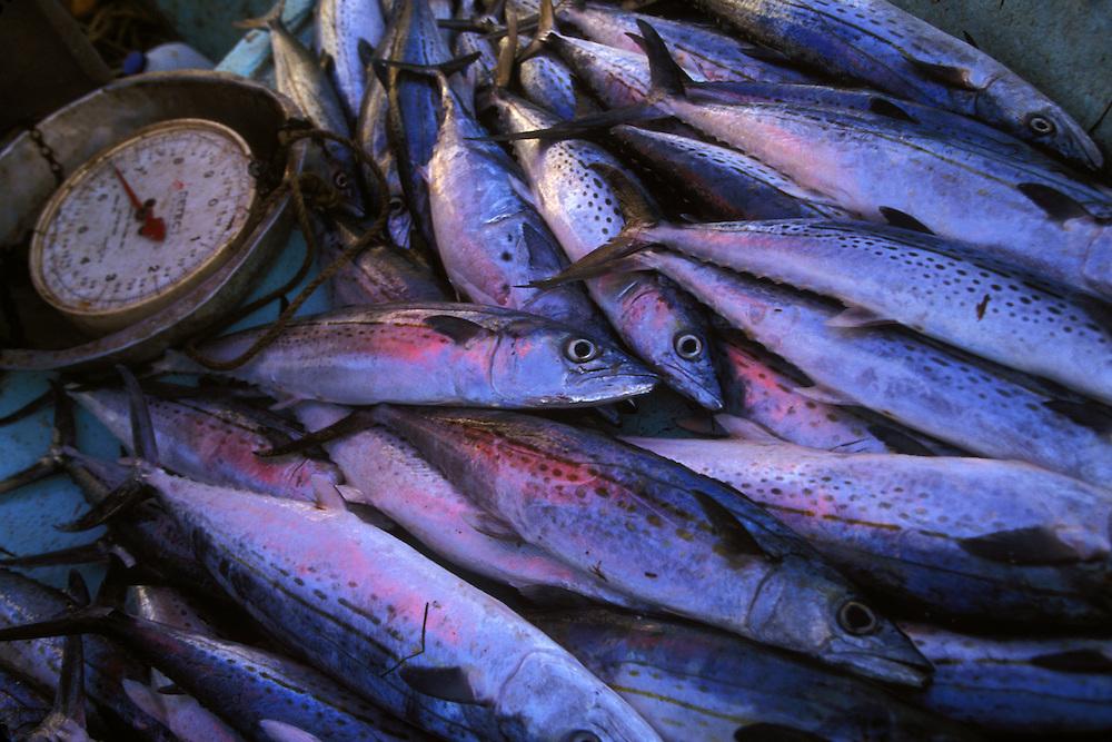 BELIZE / Belize City / Just fished at the Fishermen Market...© JOAN COSTA