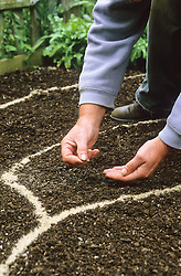 Sowing seeds outdoors<br /> Sowing into areas marked out with sand poured from a bottle