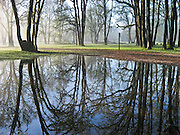 """A rainwater pond reflects trees at Champoeg State Heritage Area, Oregon. Published in """"Light Travel: Photography on the Go"""" by Tom Dempsey 2009, 2010."""