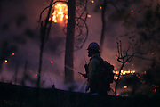 A wildland firefighter works on a blaze in Conconully on Friday August 21, 2015.<br /> <br /> Bettina Hansen / The Seattle Times