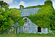 Derelict cottage for sale, in need of renovation,covered in ivy and other creepers in Fethard-on-Sea, Co. Wexford, Ireland