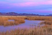 Crystal Marsh after Sunset, Ash Meadows National Wildlife Refuge, Nye County, Nevada