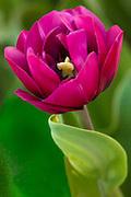 FLOWERS-MACRO-CLOSEUP-