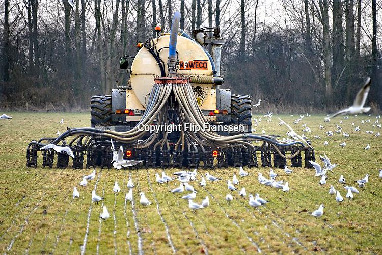 Nederland, Kekerdom, 16-2-2017Een loonwerker rijdt met een tractor over het land om mest in de grond, bodem te injecteren. Op het perceel stond graan en dat is kort geleden geoogst. De injecteermachine wordt steeds gevuld vanuitt een gesloten laadbak waar vrachtwagens gier in pompen. Vervolgens wodrt het dus naar de tractor en op het land uitgereden . Open gieren mag niet meer vanwege de hoge ammoniak uitstoot. A farmer is riding out liquid manure. The stale is injected into the soil , ground because of the environmental rules against ammonia emission. Foto: Flip Franssen