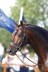 Amazing Star<br /> KWPN Paardendagen Ermelo 2010<br /> © Dirk Caremans