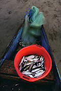 Freshly netted fish in a red plastic bucket in a blue boat on the beach at Zihuatanejo, Mexico.