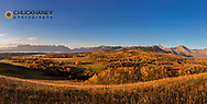 Panoramic of autumn aspen groves along the Rocky Mountain Front near Waterton Lakes National Park, Alberta, Canada