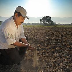 Rice, Honduras