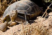 Desert Tortoise Reserve, California