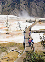 Tourists walking the boardwalks at Mammoth Hot Springs, Yellowstone National Park, Wyoming.