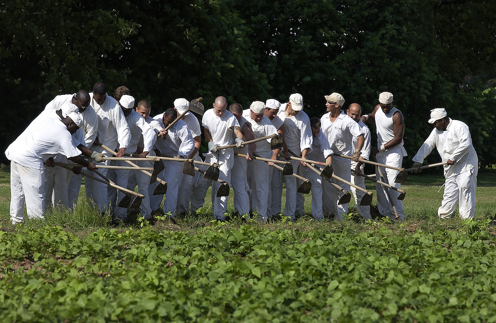 Inmates at the Cummins Unit of the Arkansas Department of Corrections, also known as the Cummins Prison Farm, hoe a field by hand.