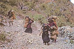 Tibetan Refugees Traveling South