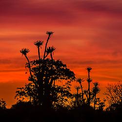 Pôr do sol Angolano no mato perto do Porto Amboim. Kwanza Sul. ANgola
